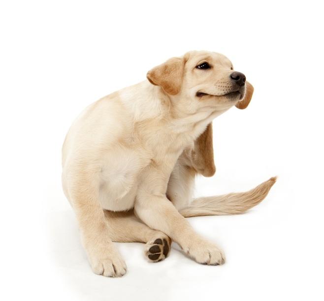 jeuk bij hond
