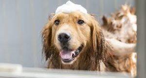 middel tegen jeuk bij honden