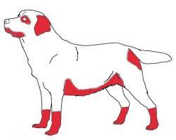 hondenziekte jeuk